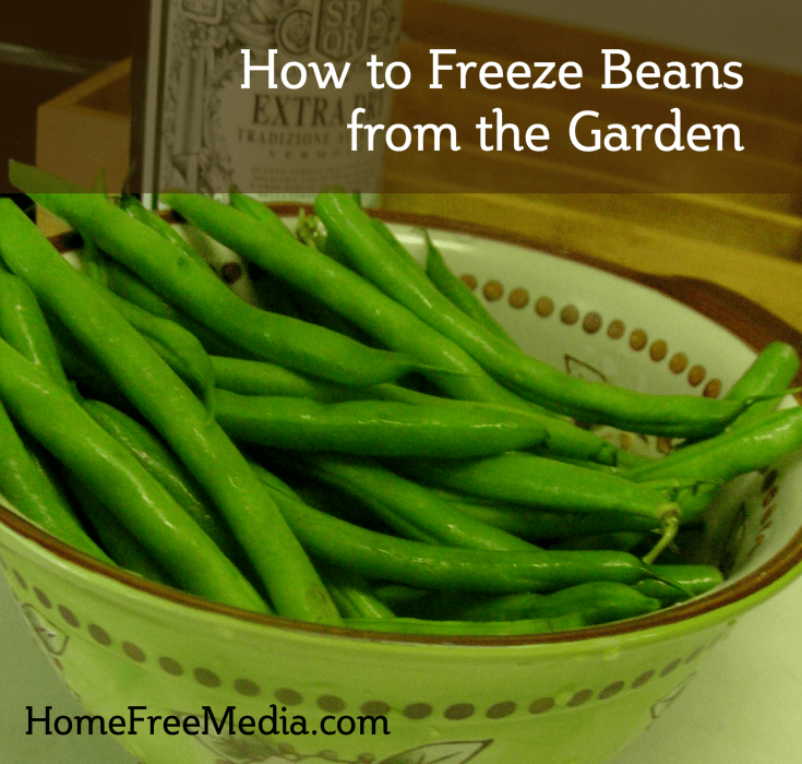 How to Freeze Beans from the Garden