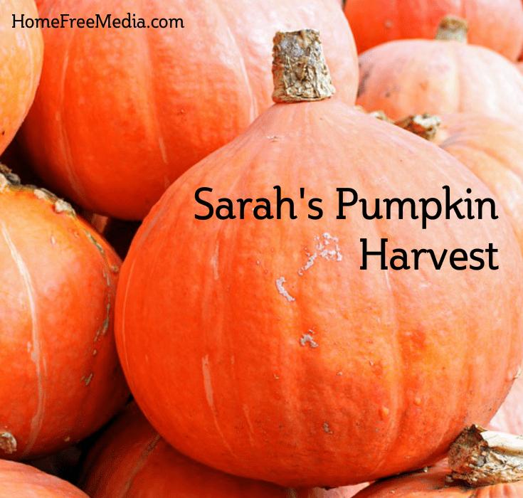 Sarah's Pumpkin Harvest