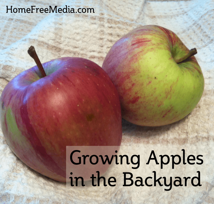 Growing Apples in the Backyard