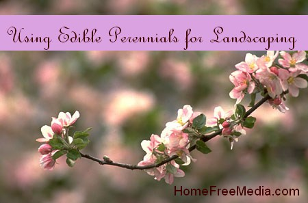 Using Edible Perennials for Landscaping