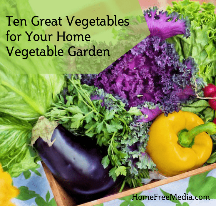 Ten Great Vegetables for Your Home Vegetable Garden