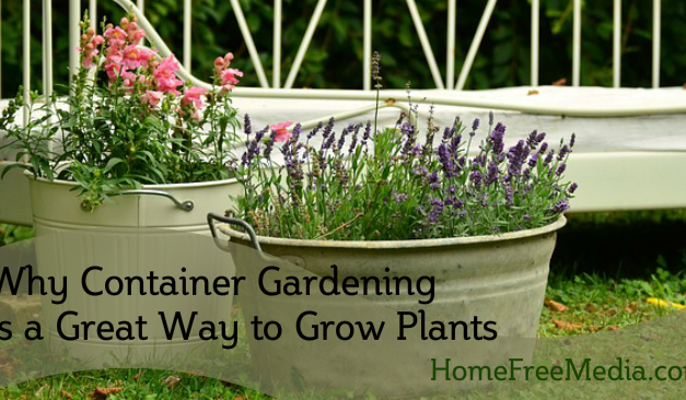 Why Container Gardening Is a Great Way to Grow Plants
